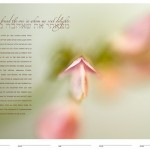 New ketubah designs for 2008