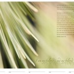Introducing the Evergreen Ketubah and the Sun Daisy Ketubah