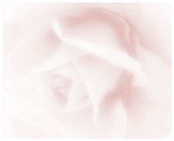 Soft Rose ketubah by Daniel Sroka